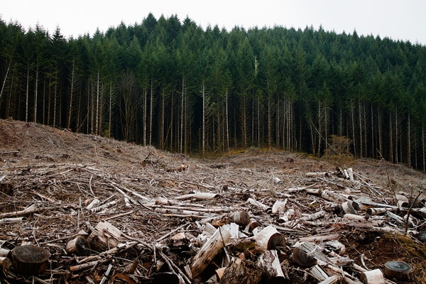 deforestation canada essay How do we define afforestation and deforestation environmental sciences essay print this essay has been submitted by a in canada deforestation affected.