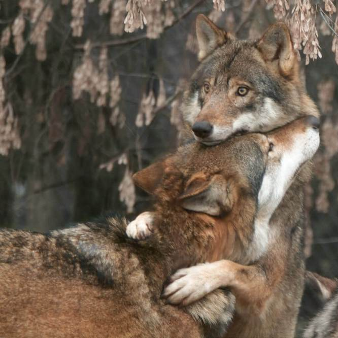Animals hug too