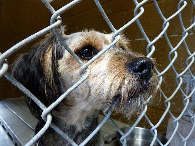 Adopt shelter animal