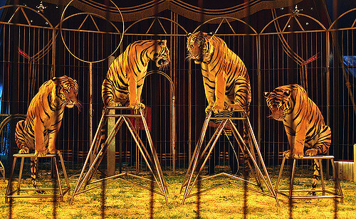 Circus animals are abused